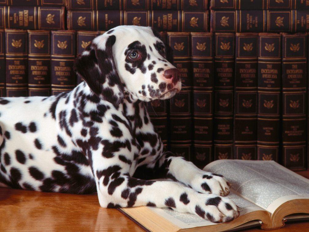 5 geniales perros de la literatura #culturaquemadura